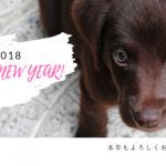 戌年 新年ご挨拶